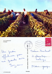 En Champagne - Vendanges - 1974