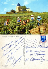 Vendanges en Champagne - 1966