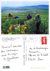 Vendanges en Champagne - 1995