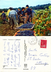 Vendanges en Champagne - 1972