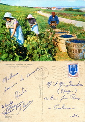 Vendanges en Champagne - 1967